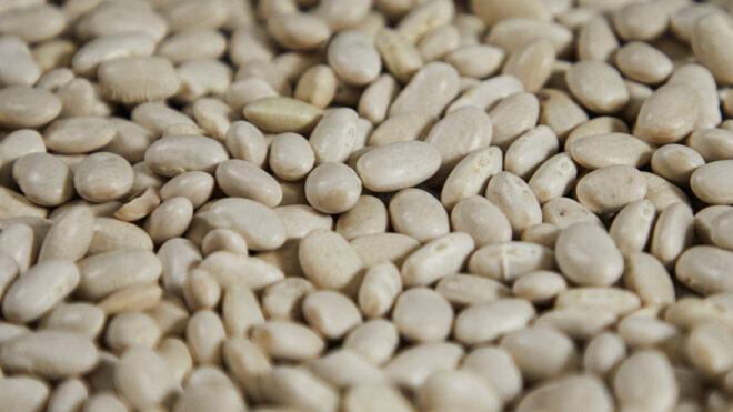 White Alubia beans